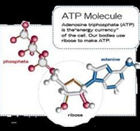 Increasing Energy (ATP) - D-ribose